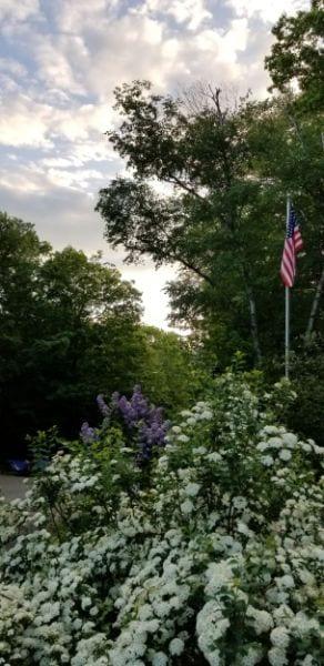 flag in spring