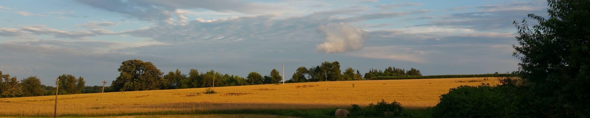 il field