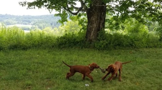 Puppy Playtime (Silver Linings, 8-26-2020)