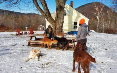 COVID Time Dog Training