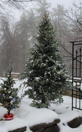 tree outside