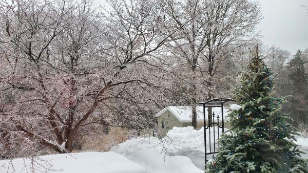 icy february